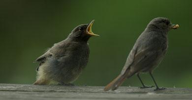 Maman , j'ai faim !!! © E .  LAUCHER