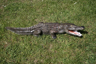 aligator  frantz bogen zone tué 4