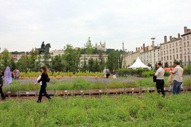 Place Bellecour - Juin 2011 © Anik COUBLE