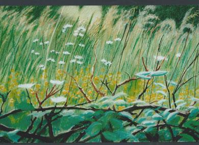 Herbes de Granes, pastel 75x50 Sylvie Berman artiste peintre