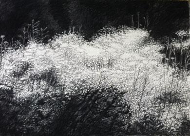 Eblouissement (2) 110x70 fusain-pastel Sylvie Berman artiste peintre