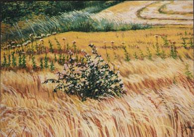 Blés, mauves, chardons, pastel 65x50 Sylvie Berman artiste peintre