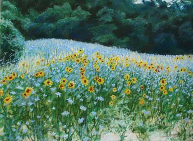 Rivière de fleurs, pastel 42x32    Sylvie Berman artiste peintre