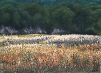 Portes de la forêt, pastel 65x50 , Sylvie Berman artiste peintre