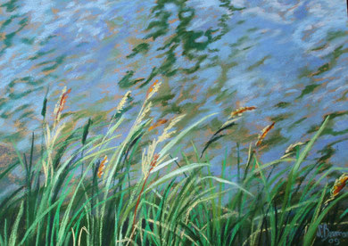 Roseaux, canal du Midi, pastel 65x50 Sylvie Berman artiste peintre