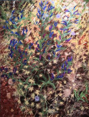 Bourrache en gloire pastel 65x50 Sylvie Berman artiste peintre
