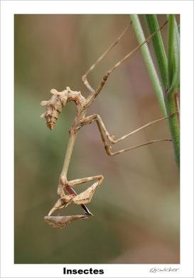 Insectes, arachnides et minuscules