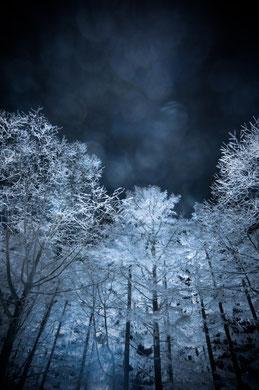 「冬夜オーラ」 アサヒカメラ.net「 写真の殿堂」2010.02選出「入選」