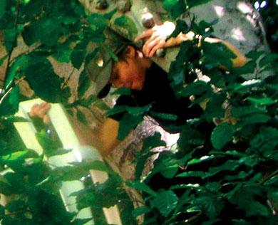 hawaiian lifestyle, tree performance, leipzig 2004, copyright chantal labinski and marcel hager