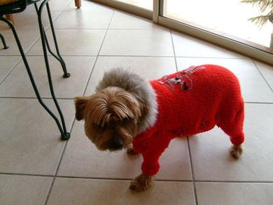 manteau tricoté avec pattes pour choupette