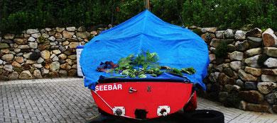 """Seebär"" Minimal Landart copyright erdengoldKUNSTwerk Nathalie Arun"