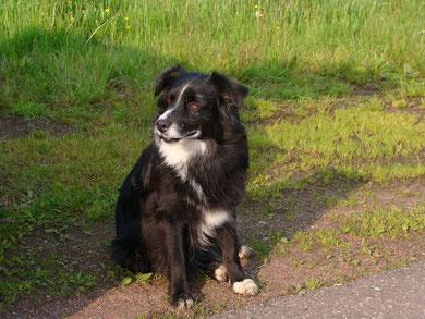 Miss Dare *** grummel *** Hundestrand verboten weil hohe Anziehungskraft aufgrund Hitze