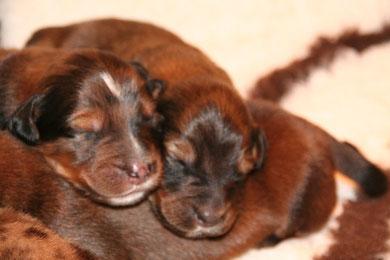 Brüderchen und Schwesterchen Blau und Rosa liegen bequem.