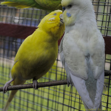 Ein kleines Küsschen!