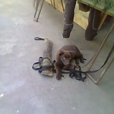 March`s erster Besuch am Hundeplatz