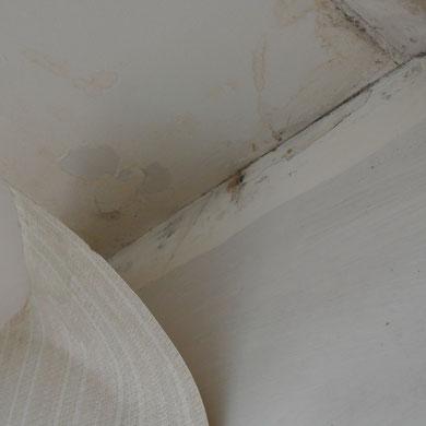 Auch hygienischen Gründen sollten alte Tapeten vollständig entfernt werden