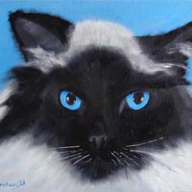 Katze, 18 x 24 cm. Öl auf Leinwand