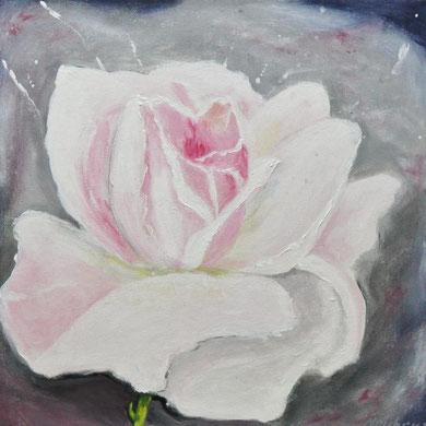 Rose, 40 x 40 Acry