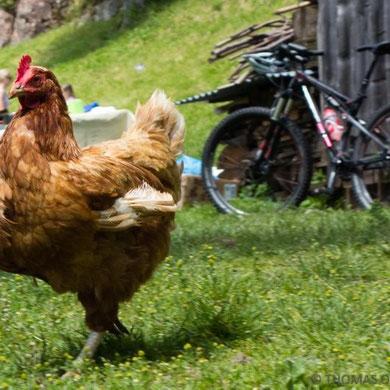Auf dem Köfele-Hof in Hafling bei Tante Lene teilt sich das Mountainbike noch mit der Henne den (Bauern-)Garten.