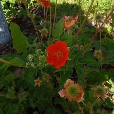 25.05.2012 - Blumenrabatte in Presseck