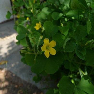 07.07.2011 - Im eigenen Garten