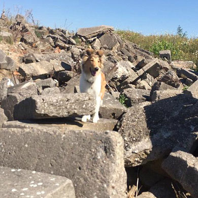 Trümmertraining bei der Rettungshundeausbildung