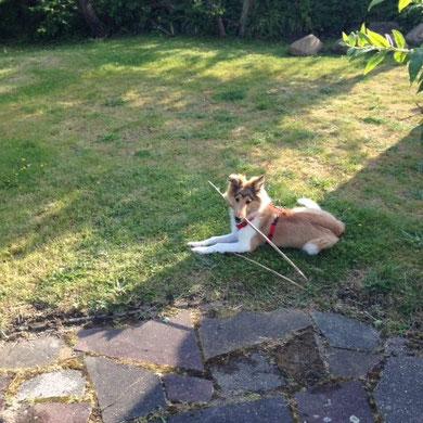 Und den Garten aufräumen muss die arme Maus auch noch ;)