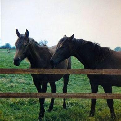 Frühjahr 1985: als Jährling mit ihrer Halbschwester Usambara (re.)