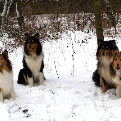 v.li. Ghala, Akani, Balou und Bjarki