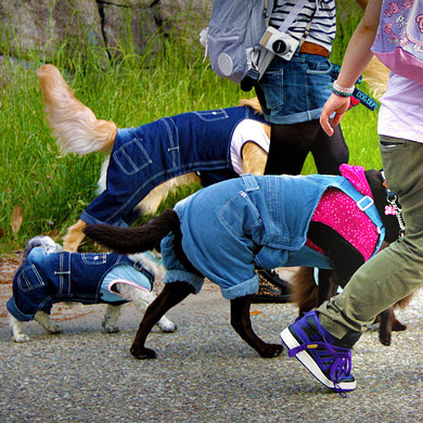 Even the dogs are wearing fashion. Harajuku Street Fashion, Tokyo. Japan 2013 © Sabrina Iovino | JustOneWayTicket.com