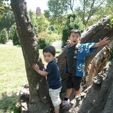 木登りは二人とも大好き。一度登ったことのある木の場所は忘れません。