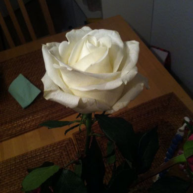Ist es nicht schön wie toll unsere Rosen aufgeblüht sind.