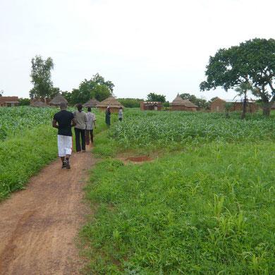 Des champs de mil au mois d'août. Une concession du village de Pouima.
