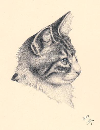 「猫の肖像1」 220x180mm     細密ペン画 302,400円(税・額込み)