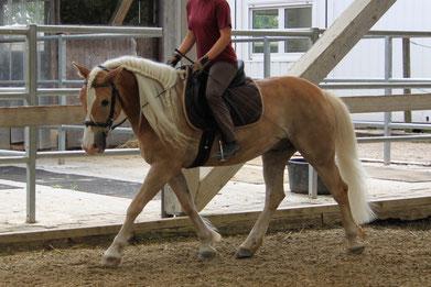 Sitzschulung mit eigenem Pferd, am 18. Mai 2019 lassen Sie sich überraschen.