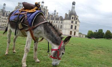 Gîte famille et groupes à Cheverny - tourisme châteaux, balades à dos d'âne, vacances en famille, amis - Val de Loire, Loir-et-Cher