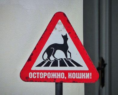 Vorsicht Katzen Schild Eremitage Winterpalast St. Petersburg Russland