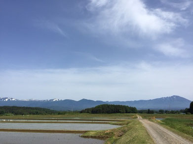 左に見えるのが秋田駒ヶ岳。最も右に見えるのが岩手山。圧巻の景観でし田。
