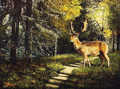 Damhirsch im Herbstwald 30 x 40  Preis 150 € über E-Bay