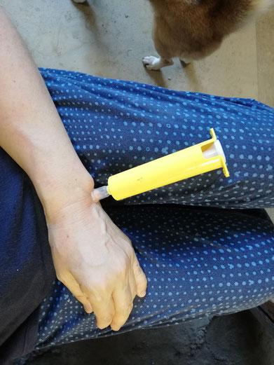 陶芸家 茨城県笠間市 ブログ 日常 蜂に刺された ポイズンリムーバー