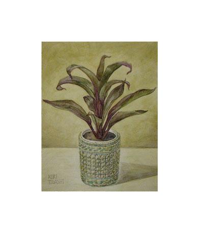 小さな植物(透明水彩)F0サイズ