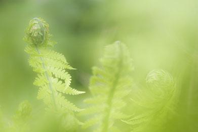 Mijn Tuin App : Mijn tuin van eden heb fotografie van erna böhre fotograaf