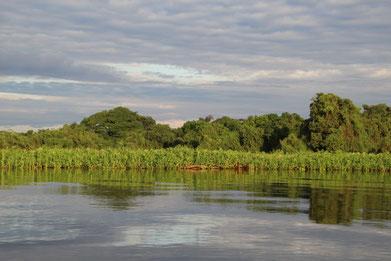 1ère ballade en bateau dans le Pantanal