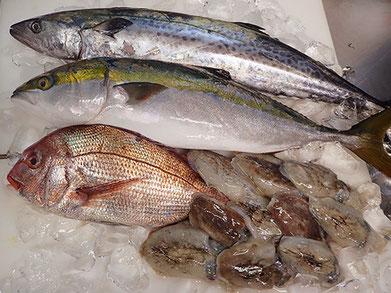 明石の魚 美味しいお寿司をお届けします!