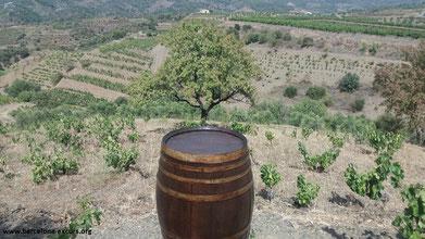 винный тур в приорат, экскурсия в приорат, винодельни приорат