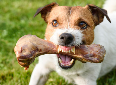 Hundeschule, Hundeschule Butzbach, Verhaltensberatung