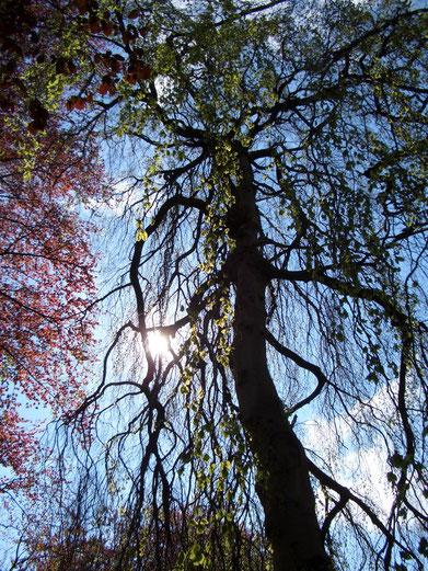 Bild Kraft der Bäume