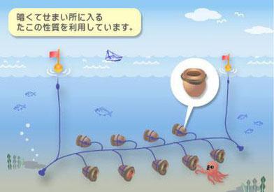 たこつぼ漁
