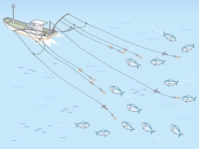 引き縄釣り漁