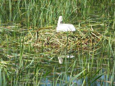 das Nest Zél-puszta Gewässer Revier3